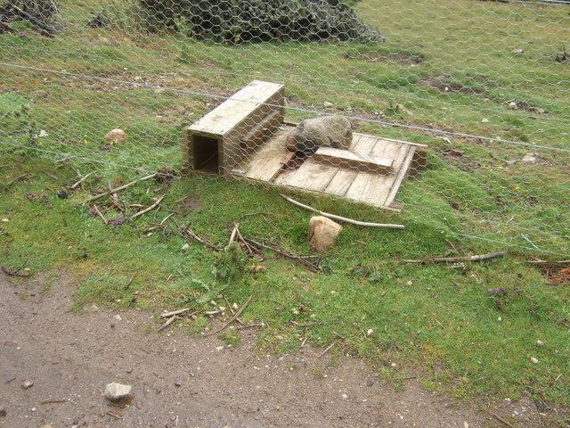 Cat Trap Box Funny