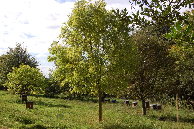 Beehives at the Kymin - geograph.org.uk - 1500871
