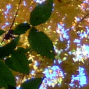 Various leaves on typical trees