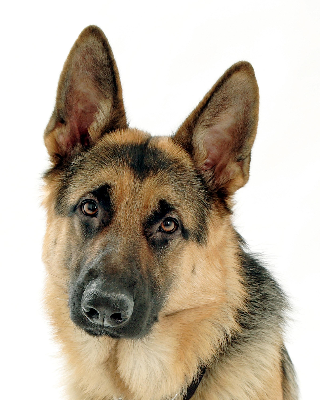 Shepherd Dog Training In Norfolk County Ontario