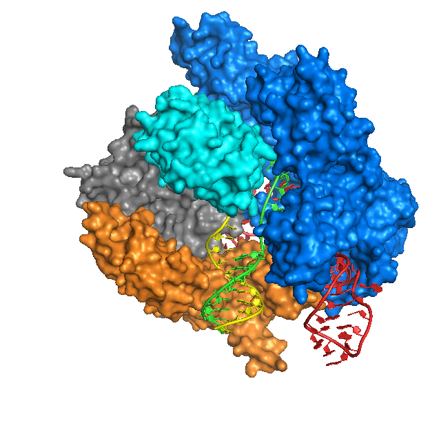 Cas9 Anders DNA bound structure