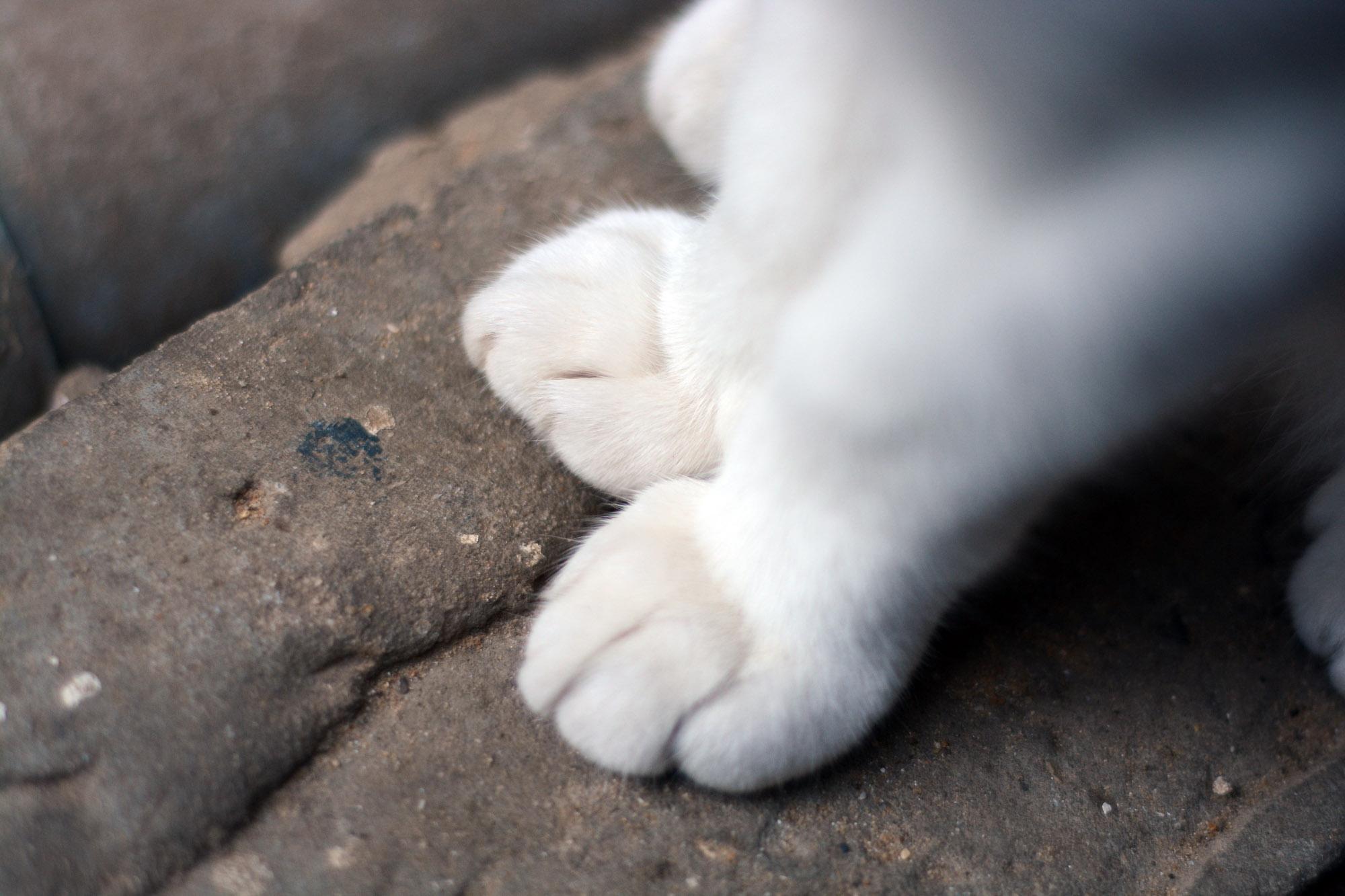 make feral cat shelter