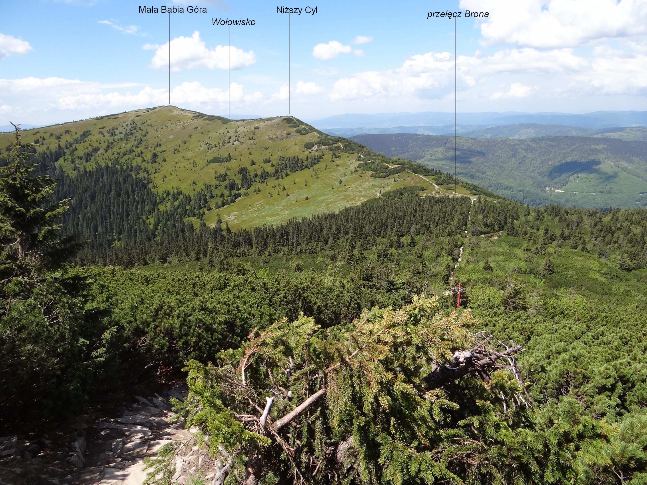 Mała Babia Góra – Wikipedia, wolna encyklopedia