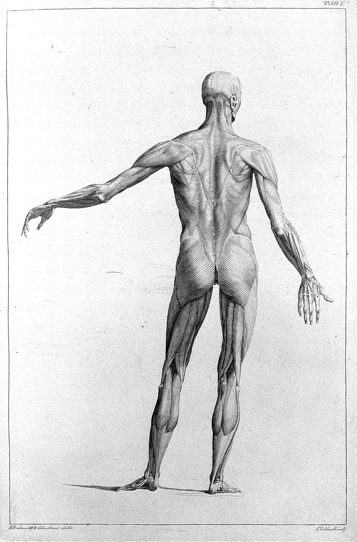 File:Engraving from The Anatomy of painting... Wellcome L0011913.jpg ...
