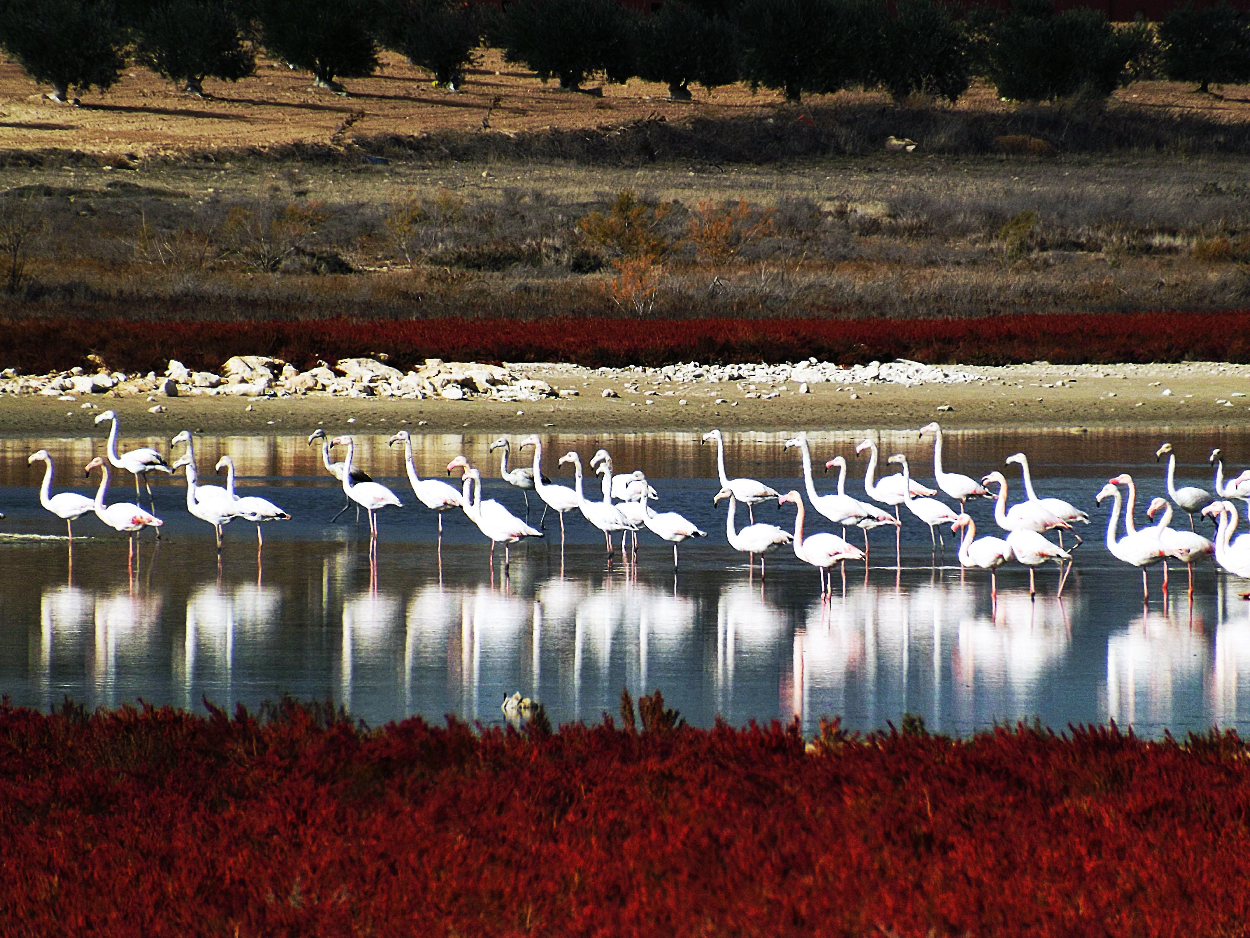 Resultado de imagen de flamencos en lagunas villacañas