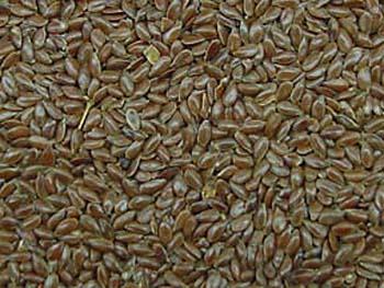 File:Flax seed.jpg