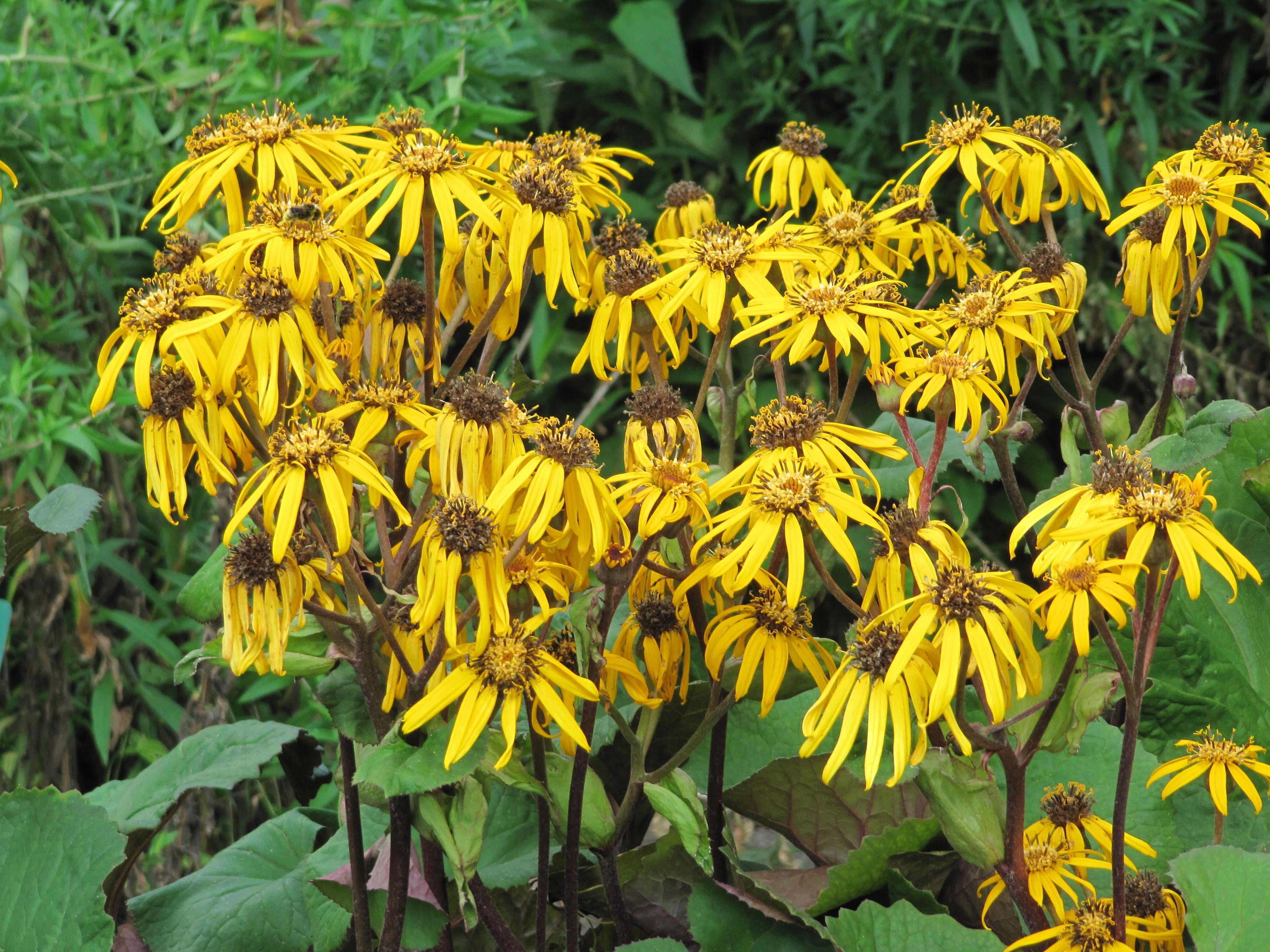 Fleurs fan es iris for Bouquet de fleurs wiki