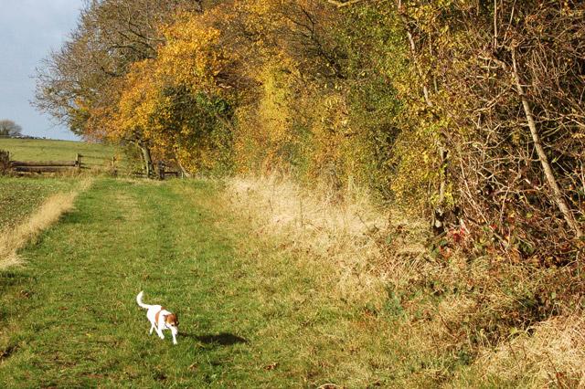 Footpath along the headland beside Ufton Wood - geograph.org.uk - 1556437
