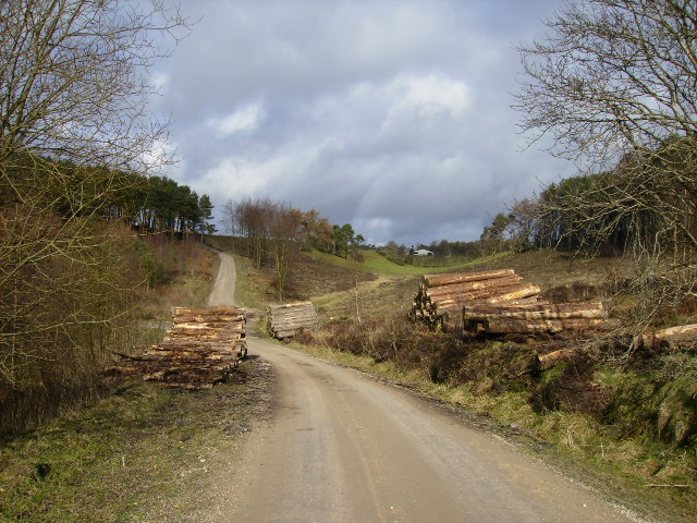 Forestry road in Broxa Forest after recent logging operations - geograph.org.uk - 337387
