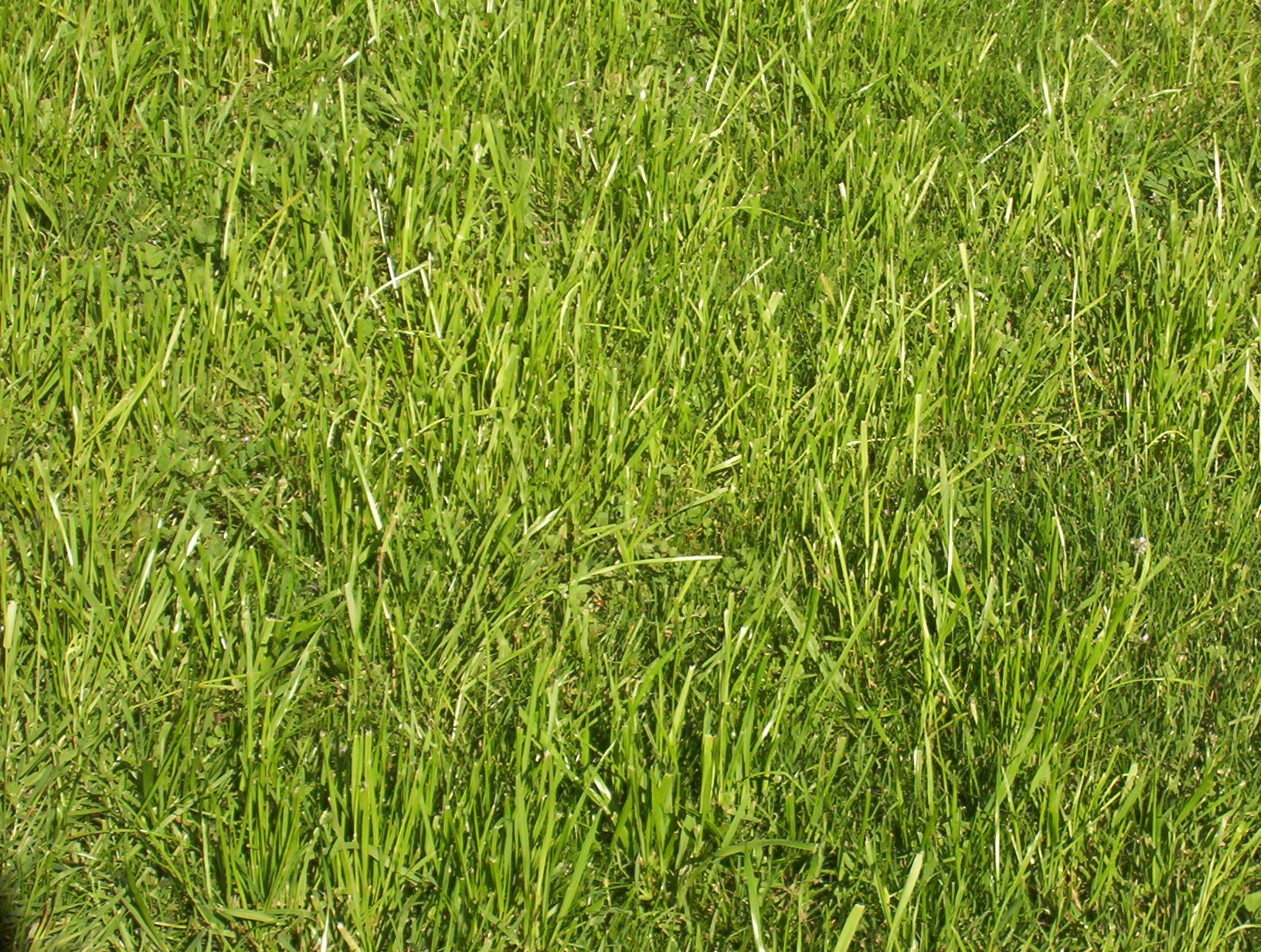 индекс: газонная трава пошла в колос что делать этого существует несколько