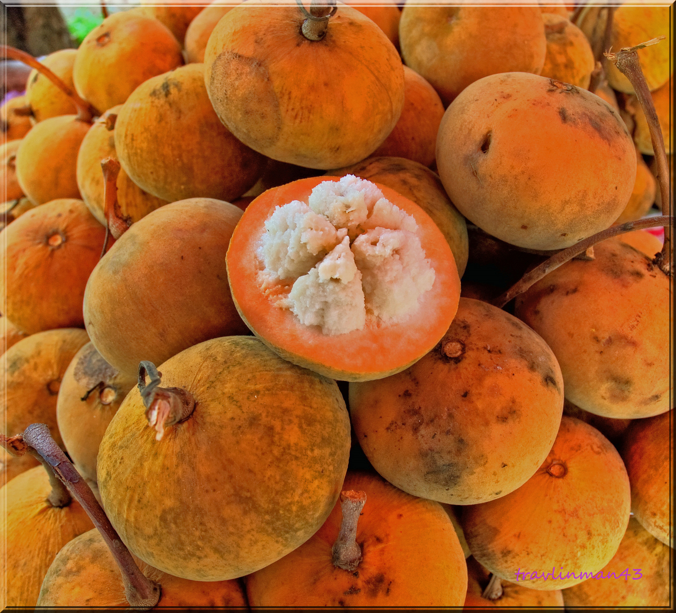 Datei gratorn fruit biologie - Fruit de l amandier ...