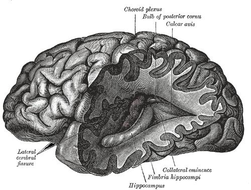 About - Brain Basics