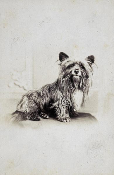 Perros famosos que nunca se han de olvidar Greyfriars_Bobby