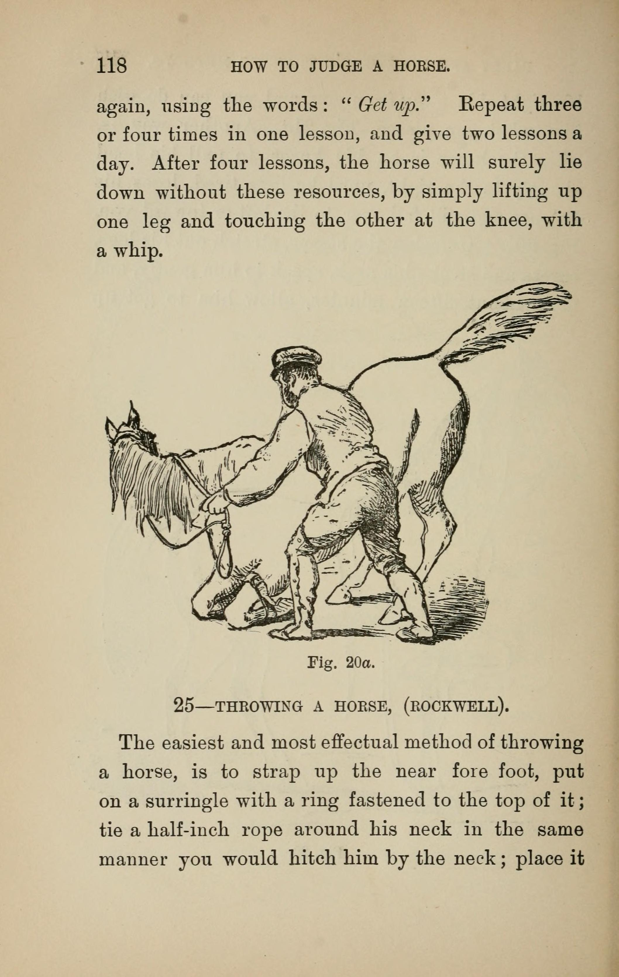 File:How to judge a horse (Page 118) BHL18289272 jpg