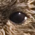 Kalan's eye.jpg