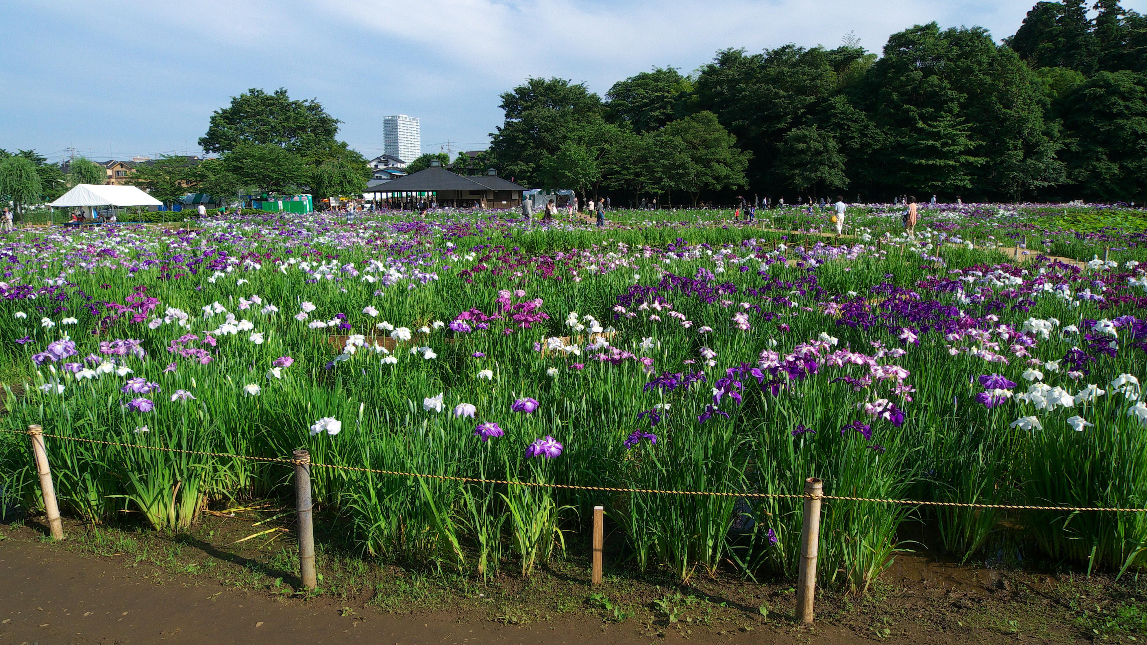 Exceptional File:Kitayama Park Iris Garden