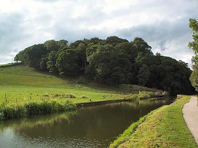 Lodge Wood near Calverley - geograph.org.uk - 43984