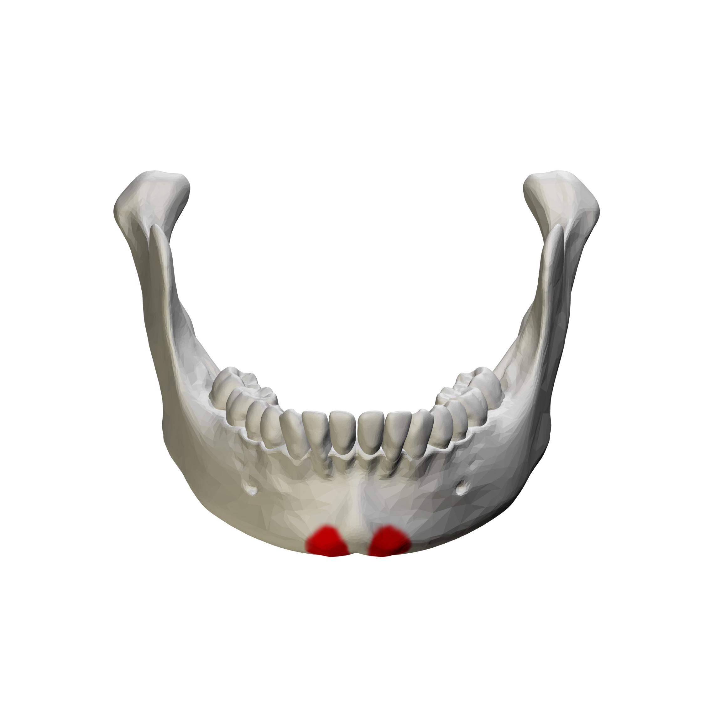 File:Mental tubercle - close up - anterior view01.png ...