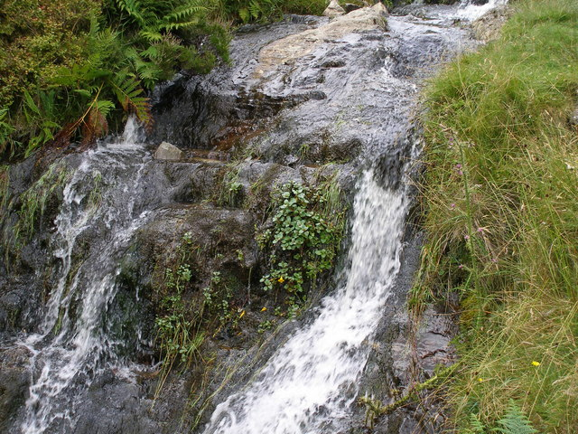 Mimulus grows wild in the centre of the stream - geograph.org.uk - 912362