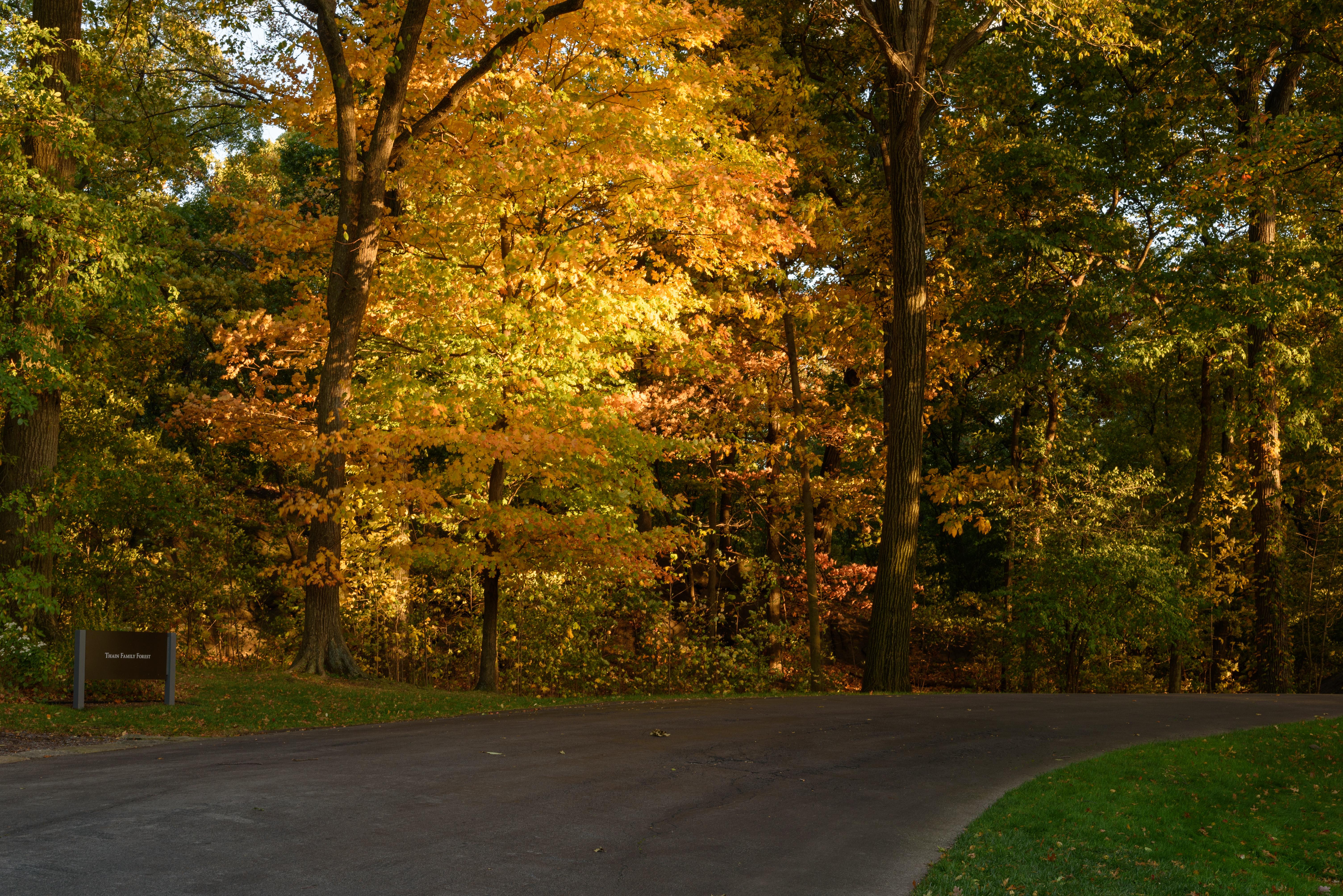 File:New York Botanical Garden October 2016 015.jpg - Wikimedia Commons