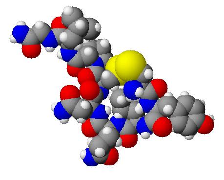 3-D Oxytocin