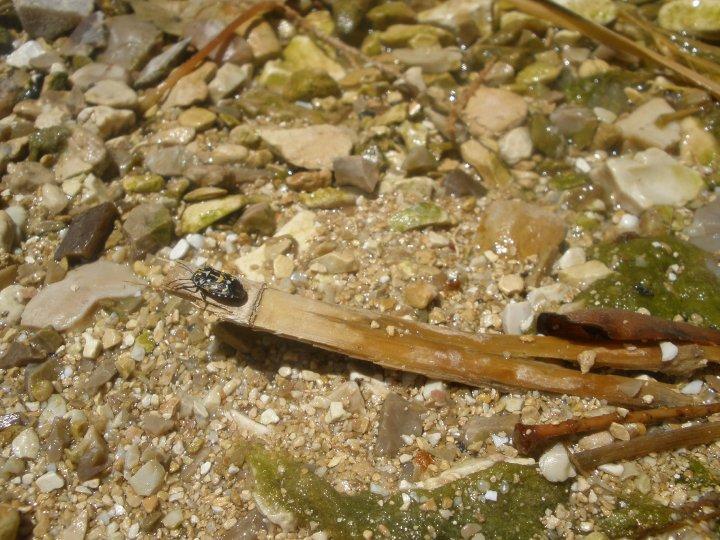חרקים בנחל דוד