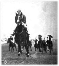 Rosedrop British-bred Thoroughbred racehorse
