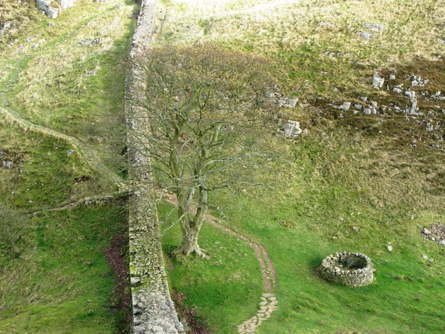 Sycamore Gap - geograph.org.uk - 599737