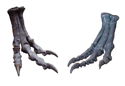 https://upload.wikimedia.org/wikipedia/commons/9/96/T._rex_versus_A._atrox_feet.JPG
