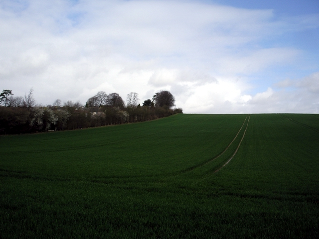 Tichborne Down, east of New Alresford - geograph.org.uk - 146268