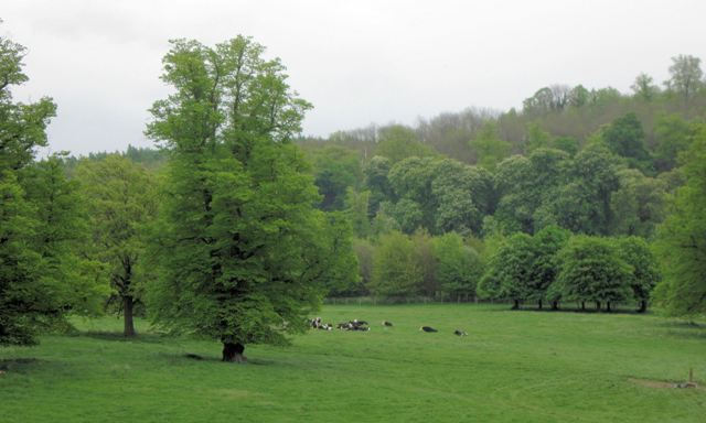 Tring Park - with cattle grazing the rich pasture - geograph.org.uk - 1342386