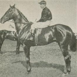 Vedas (horse) British-bred Thoroughbred racehorse