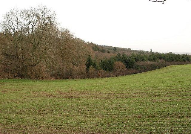 Woodland near Cushuish - geograph.org.uk - 1129537