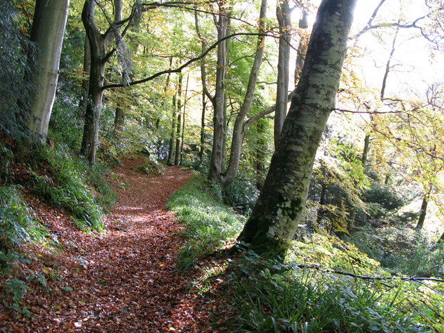 Woodland path at Allen Banks - geograph.org.uk - 598401