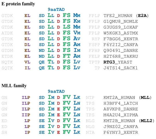 9aaTADs in the E protein family