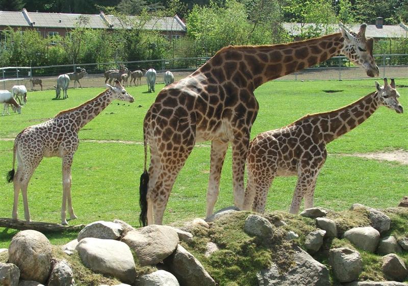 Fichier:Aalborg-Zoo-2006-02.jpg