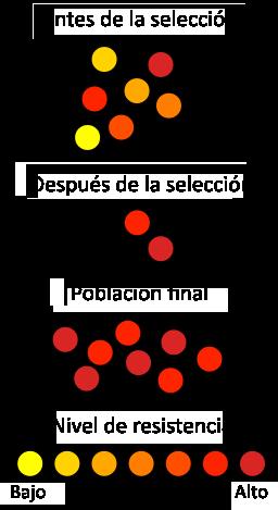 https://es.wikipedia.org/wiki/Resistencia_a_antibi%C3%B3ticos