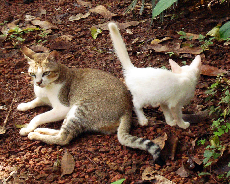 Cat And Kitten Rescue Borehamwood