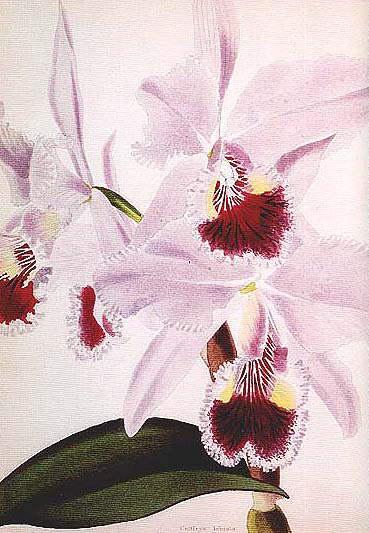 Botanical_Cabinet