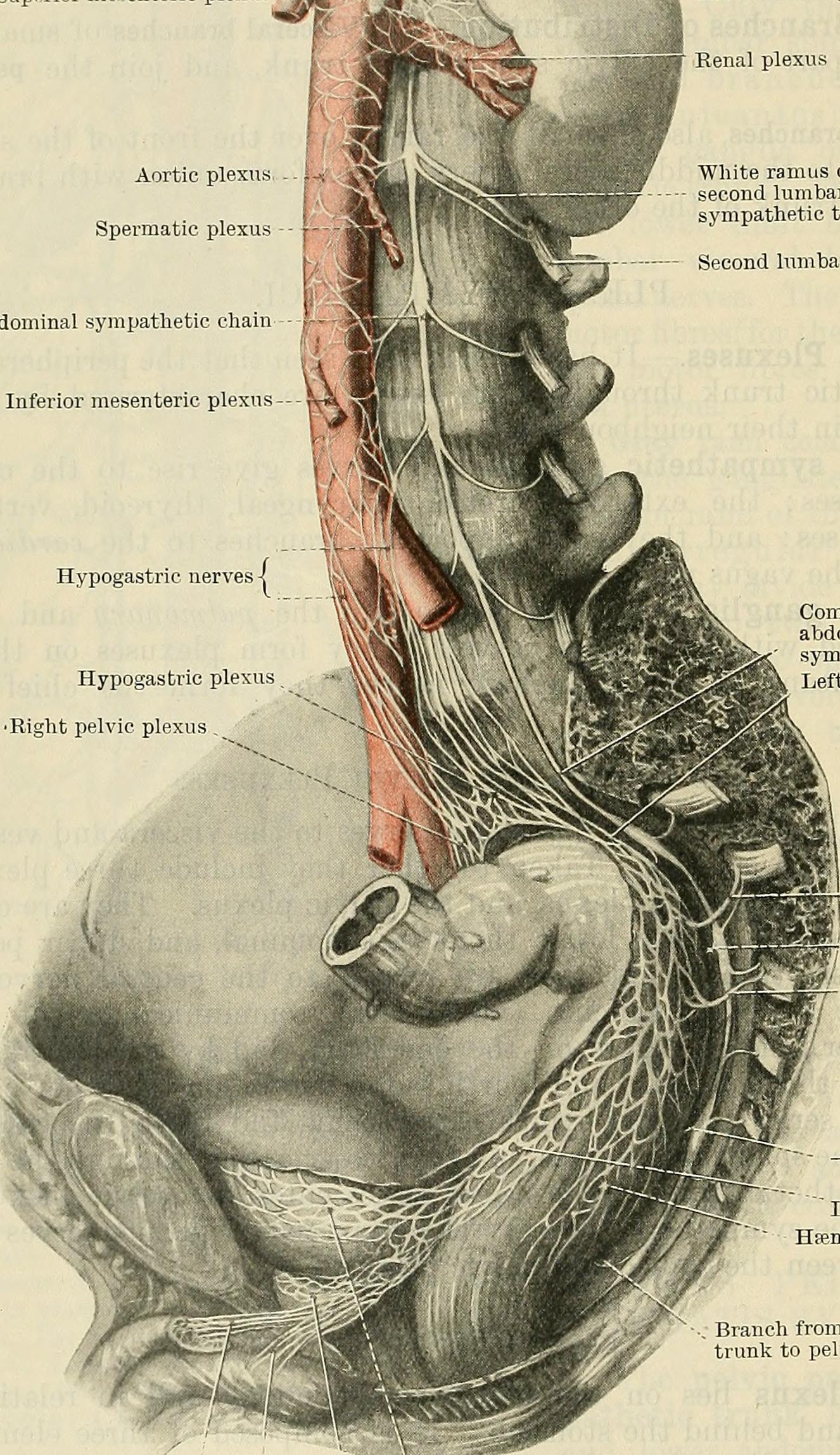 Cunninghams Text Book Of Anatomy 1914 20790477606g