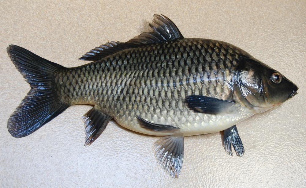 Image Result For Animasi Ikan