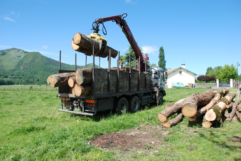 Description Déchargement de billes de bois par Alain SanguinetJPG ~ Bille De Bois Synonyme