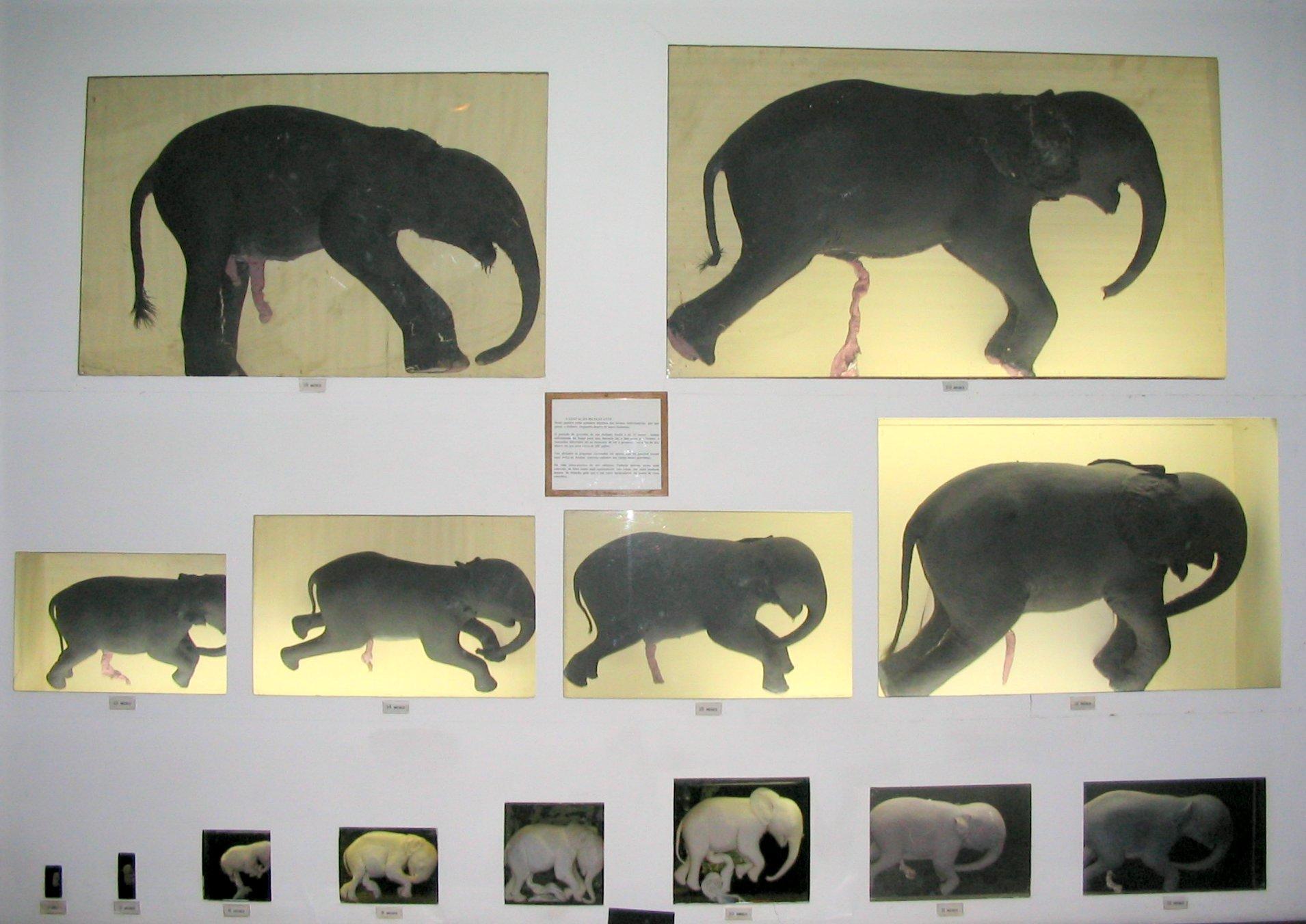Pregnancy (mammals) | Wiki | Everipedia