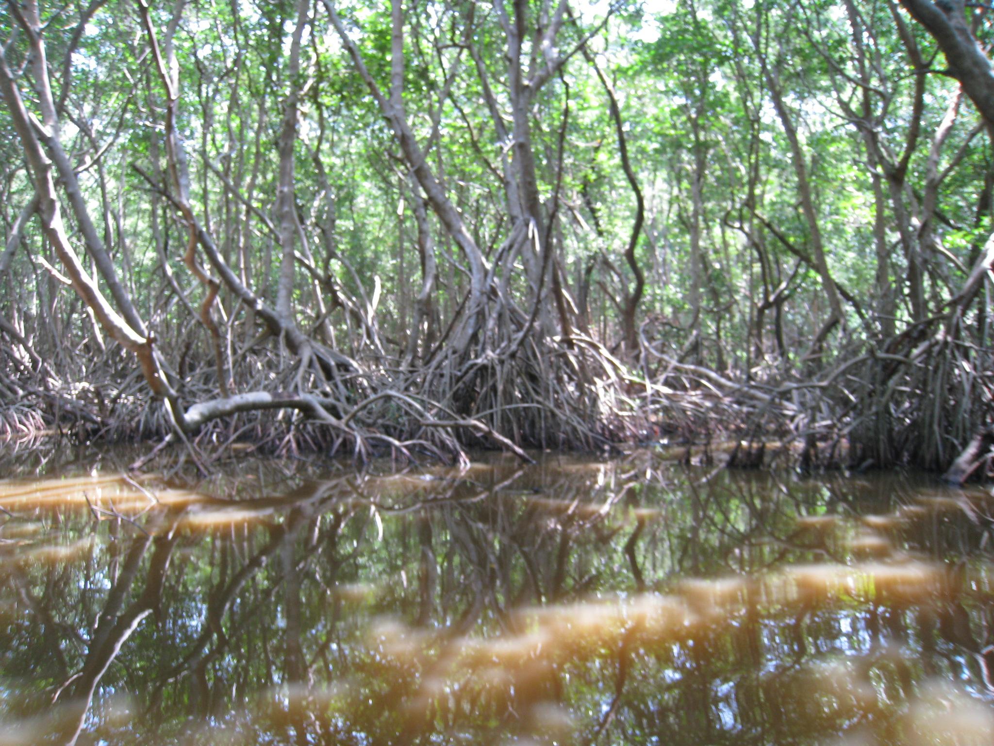 File:Espejos de agua II.JPG - Wikimedia Commons - photo#45