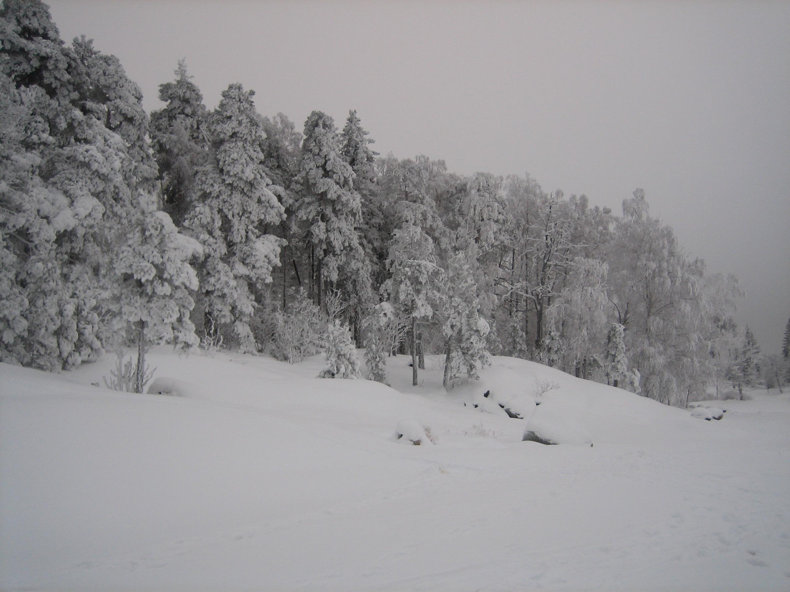 File:Frosty trees in winter wonderland Killingholma ...
