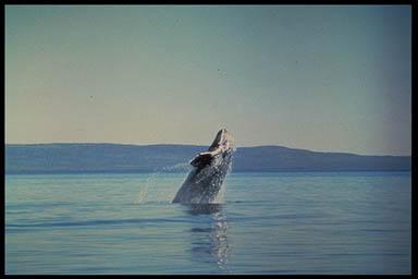 vergleich buckelwal mensch