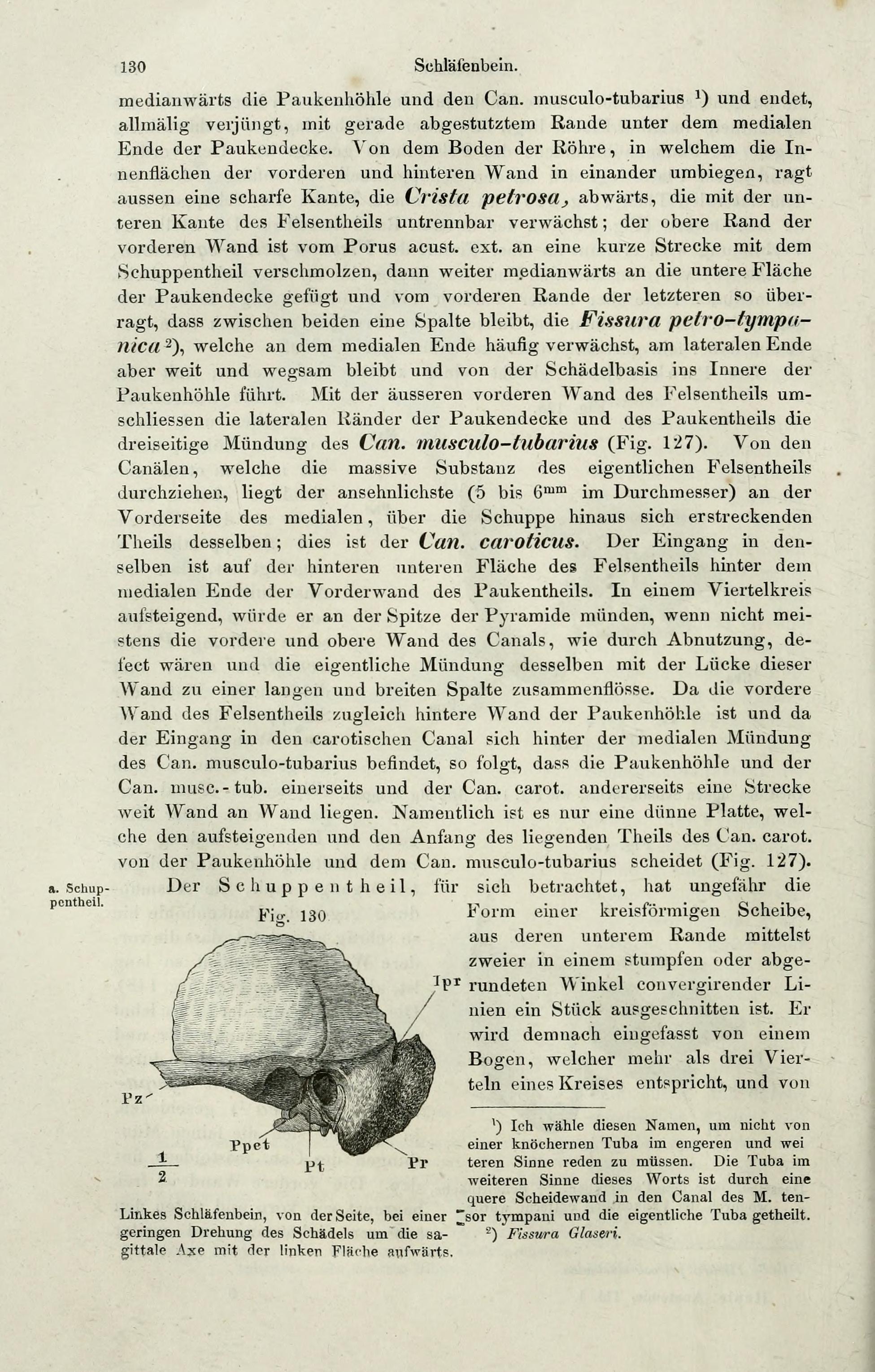 Ausgezeichnet Ct Anatomie Des Schläfenbeins Bilder - Anatomie Ideen ...