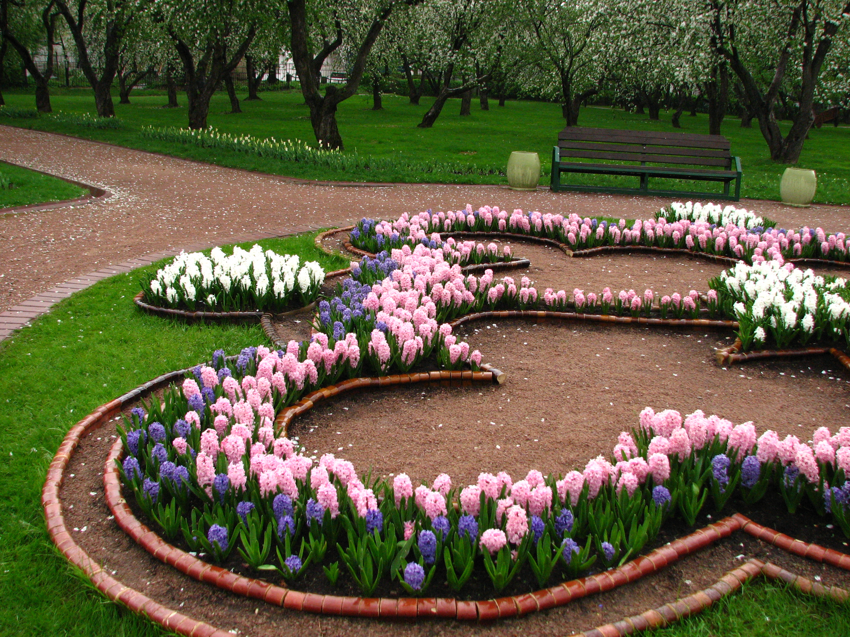 file hyacinthus in a flowerbed 02 jpg wikimedia commons. Black Bedroom Furniture Sets. Home Design Ideas