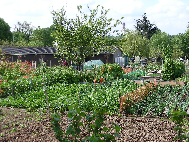 File jardins familiaux4 jpg wikimedia commons for Permaculture petit jardin