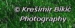 Krešimir Bikić logo.jpg